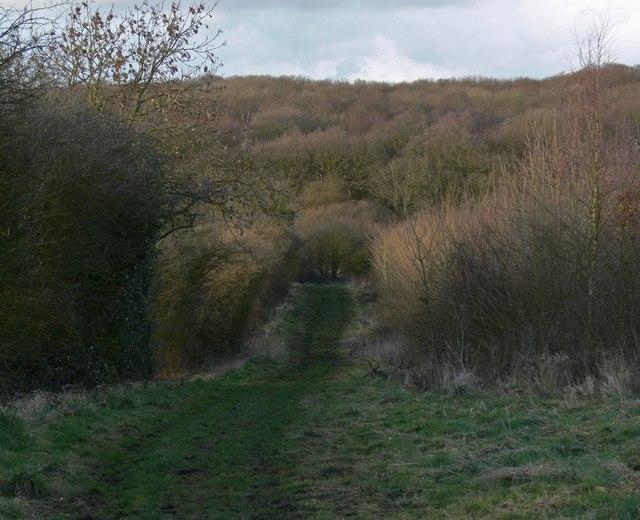 Ratby Burroughs Woodland