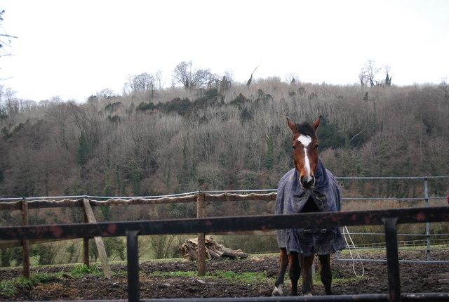 Horse in front of Noar Hill Hanger