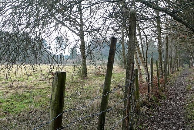 Footpath towards Pamber Heath