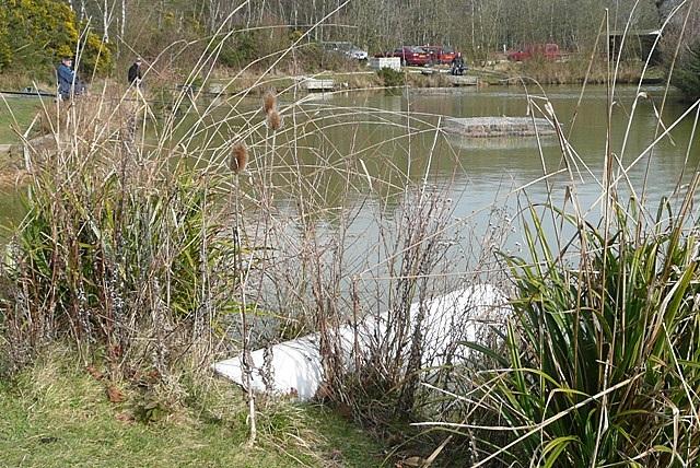 Pond at Winkworth Park