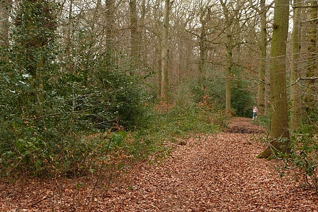 Woodland at Baughurst Common