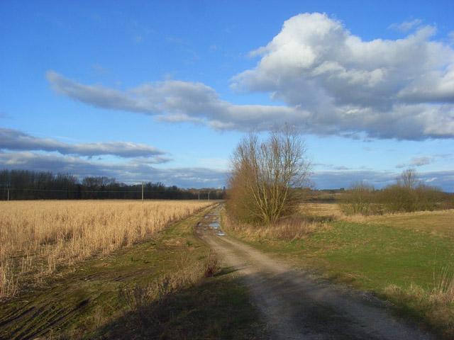 Footpath between Brimpton and Woolhampton