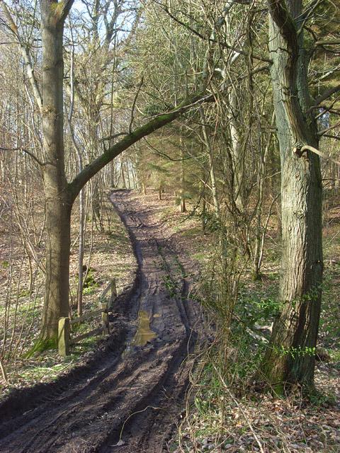Channel Wood, Midgham