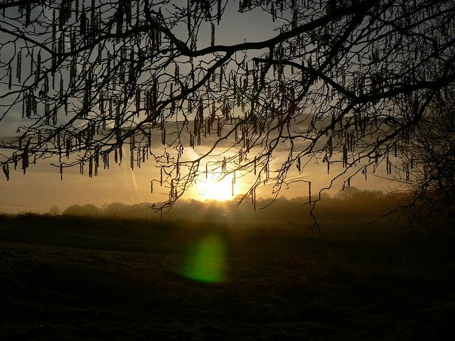 Sunrise through catkins, Sandy Hill Copse