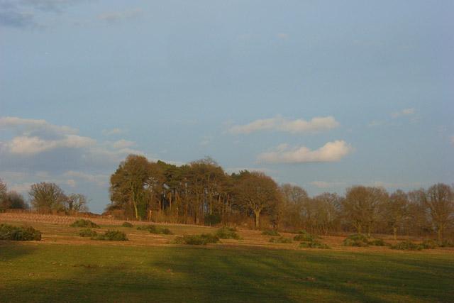 Field and woodland, Enborne
