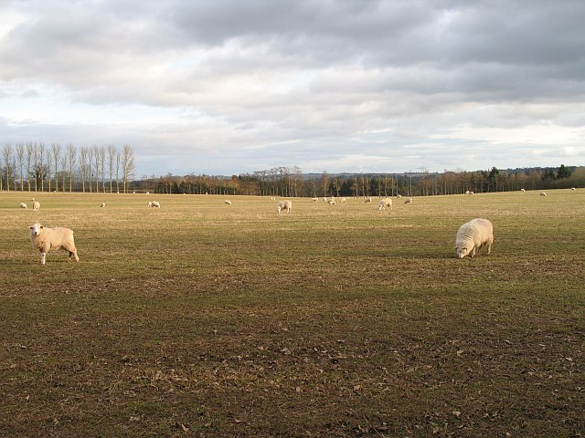 Over wintering sheep