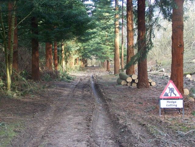BIG hedge cutting !!!