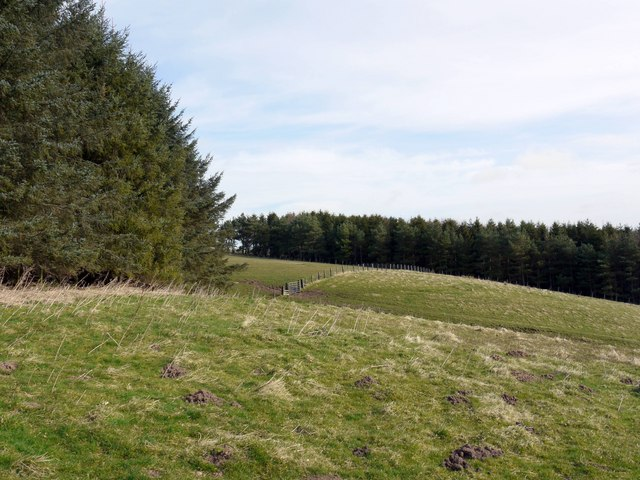 Forest plantations north-west of Alnham Church