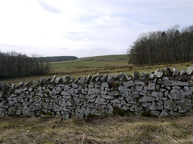 Wall by Salter's Road