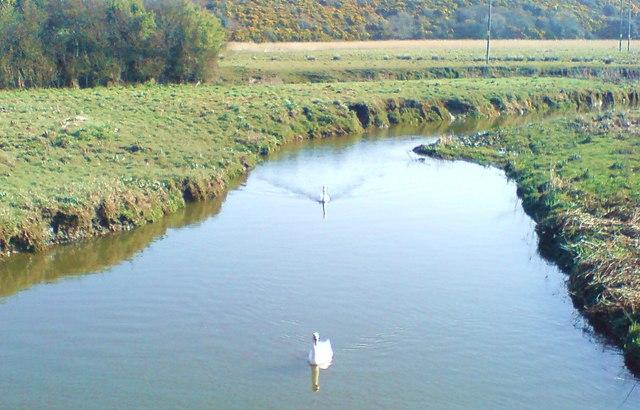Swans on Merlin's Brook