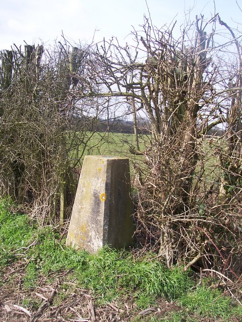 Trig point in hedge, Boughton Malherbe