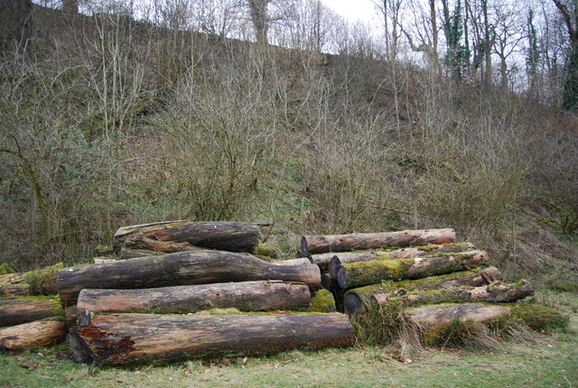 Cut trees by the Footpath