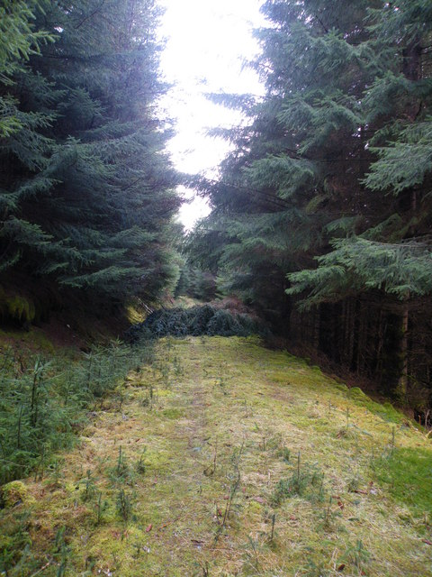Blocked Track in Ardochy Forest