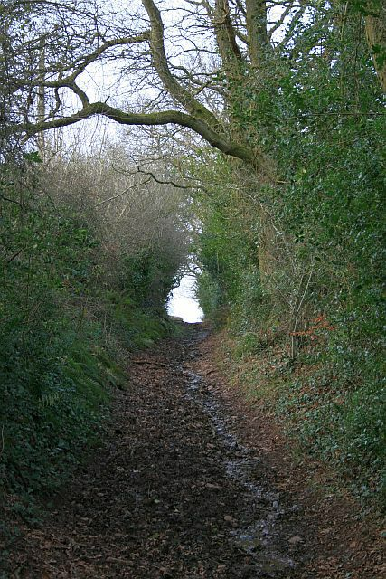 Green lane below Stoke Hill (1)