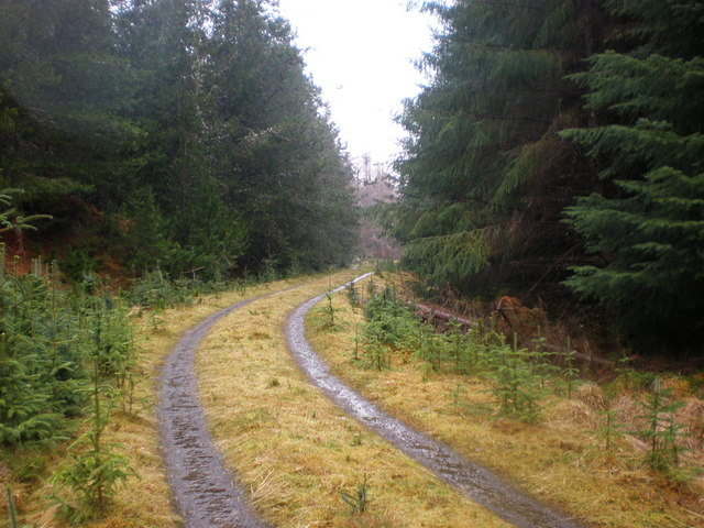 Ardochy Forest Track near Creag Ghilleaspuig