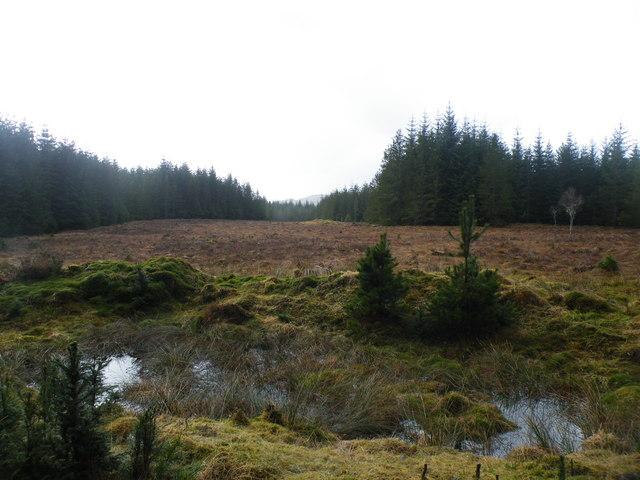 Forest Clearing near Tom a' Chaorainn