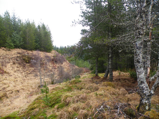 Unnamed Burn descending through Forest Clearing