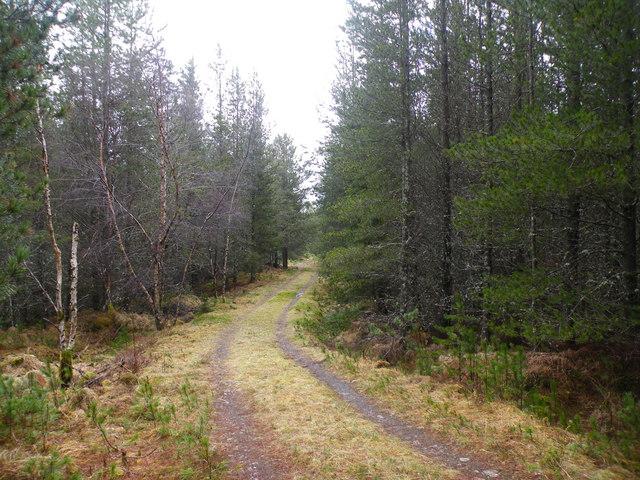 Ardochy Forest Track going down past Tom a' Chaorainn