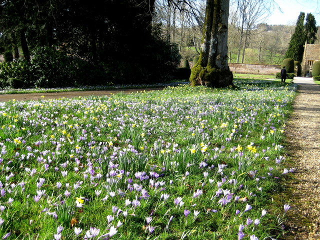 Spring flowers - Forde Abbey