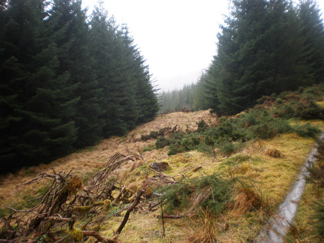 Liath Dhoire Forest Clearing near Ardochy Forest Track