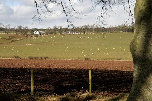 Farmland to the northwest of Ballmuir Plantation