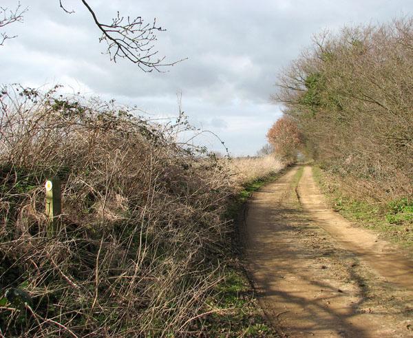 Farm track doubling as public footpath