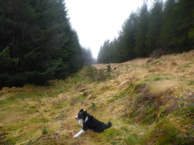 Forest Clearing going towards Lochan Bad an Losguinn