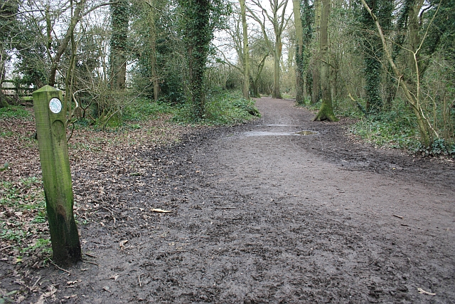 Path in Nunnery Wood