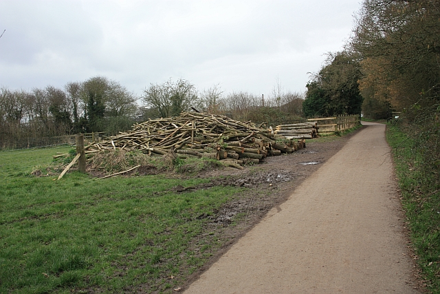 Logs close to the Countryside Centre