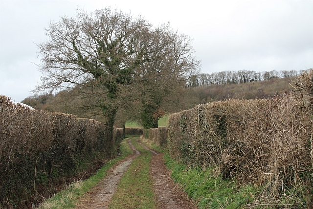 Bridleway from Ullingswick