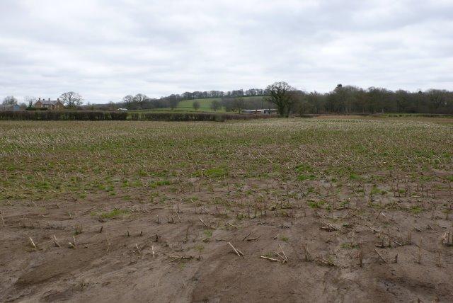 Countryside near Middlemarsh