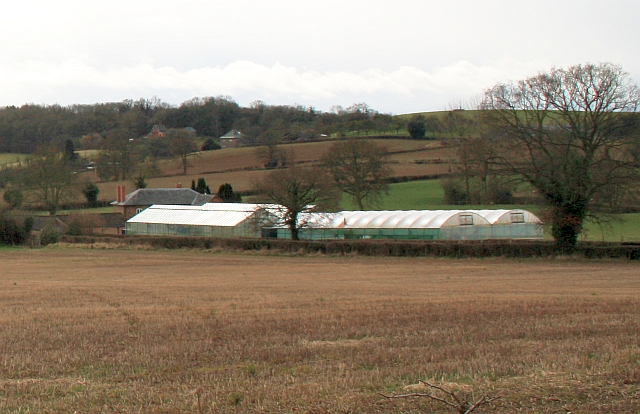Linnett Farm greenhouses