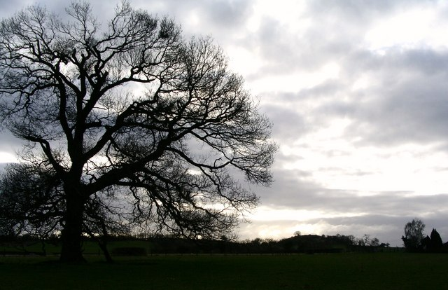 Ancient oak at Upper Battenhall Farm