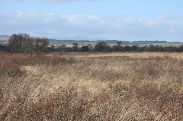 Flanders Moss and a small birch wood in the distance