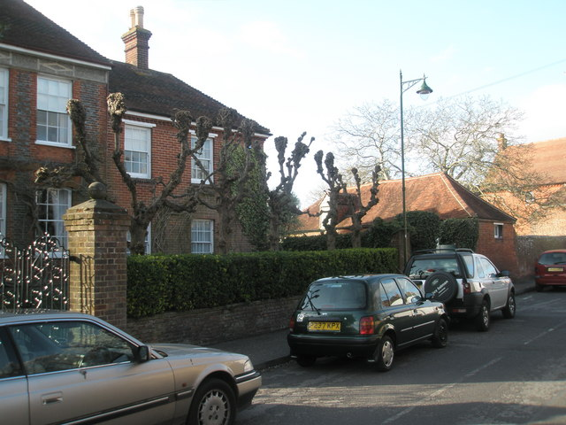 Severely pruned trees in North Street