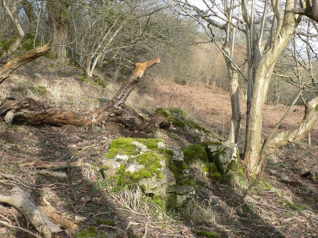 Fallen boughs, moss covered rock and a patch of bracken at Cwm Afon.