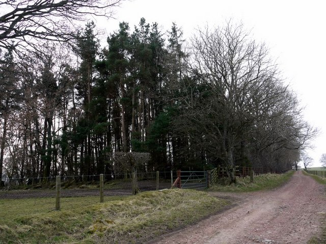 Northfieldhead Plantation