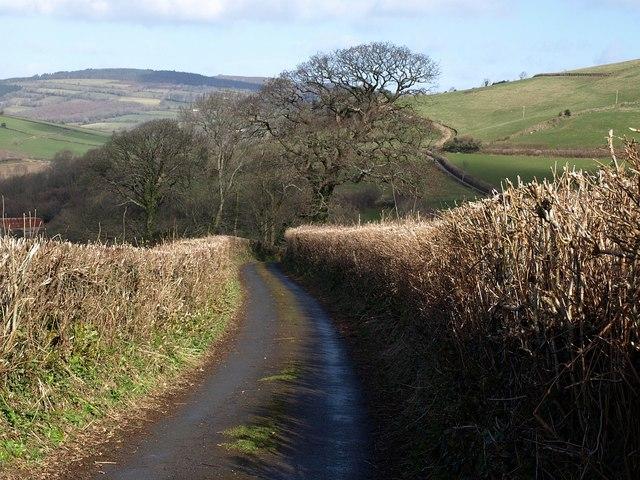 Lane to Pridhamsleigh