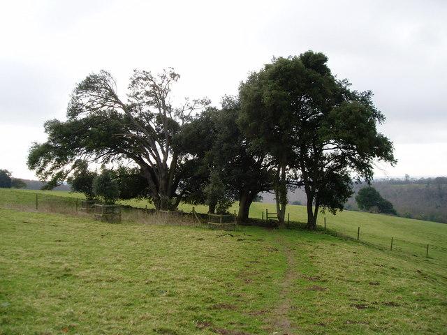 Monarch's Way passes between Ilex trees