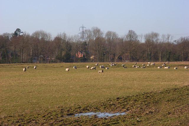 Pastures, Sulhamstead