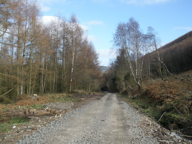 Forestry road, above Abercwmboi