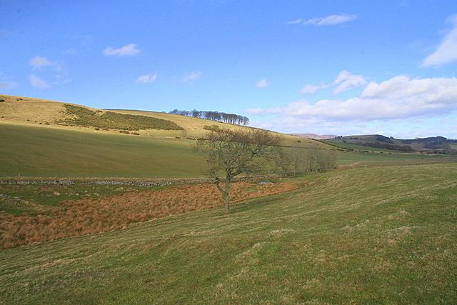 Grassland, Soutra Hill
