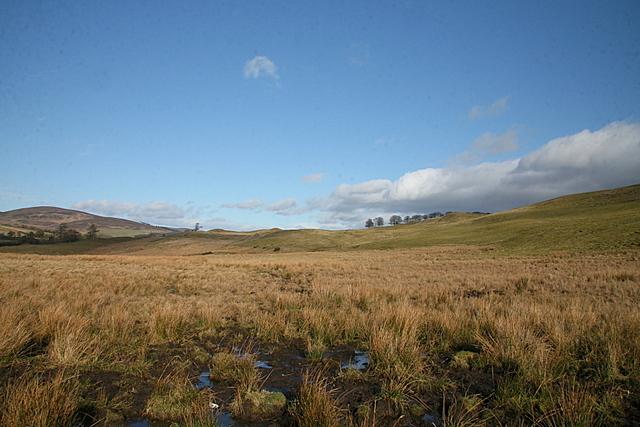 Boggy grazing land near Cowhillock farm