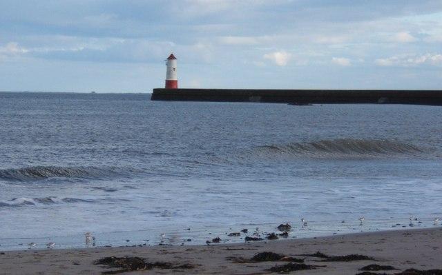 Sanderlings at the water's edge