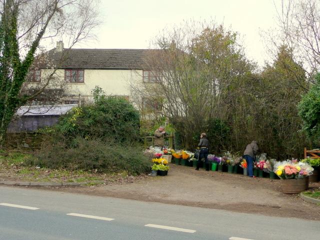 Roadside florist, Ryeford