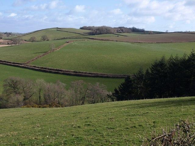 Hillside near Baddaford