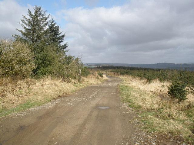 Track, through St Gwynno Forest