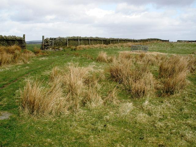 Moorland scene, above Cwm Hafod