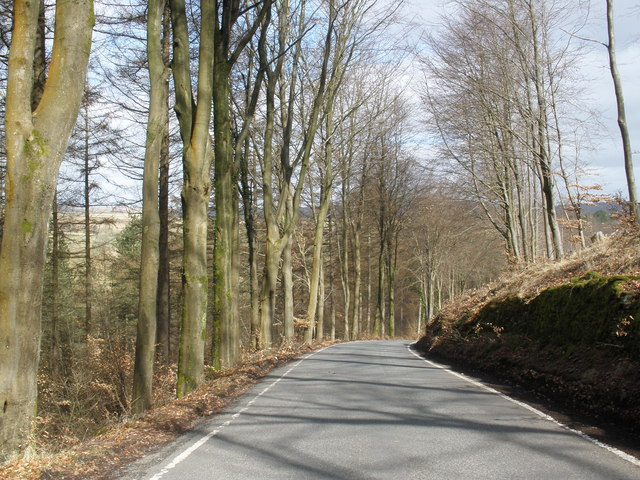 Tree-lined road through St Gwynno Forest