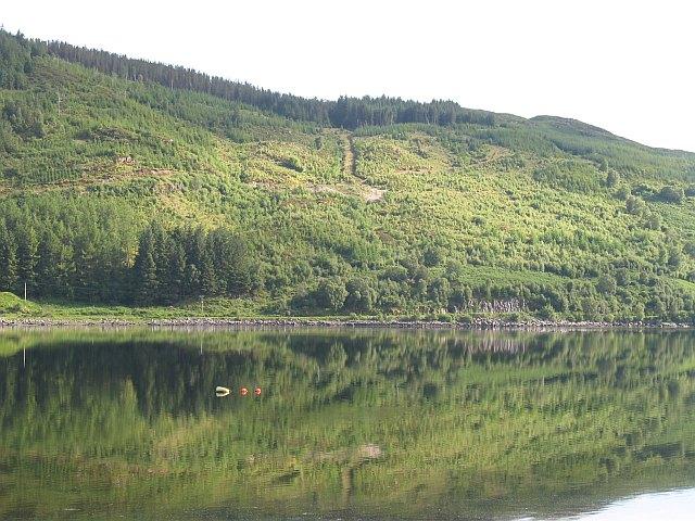 Forestry above Loch Sunart